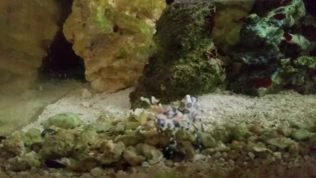 Watch and share Aquariums GIFs by fishestate on Gfycat
