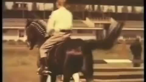 Watch Абсент - сын Араба и Баккары (Absent Akhal-Teke) GIF on Gfycat. Discover more related GIFs on Gfycat