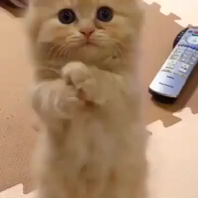 catgifs, kittengifs, KITTY BEING CUTE GIFs