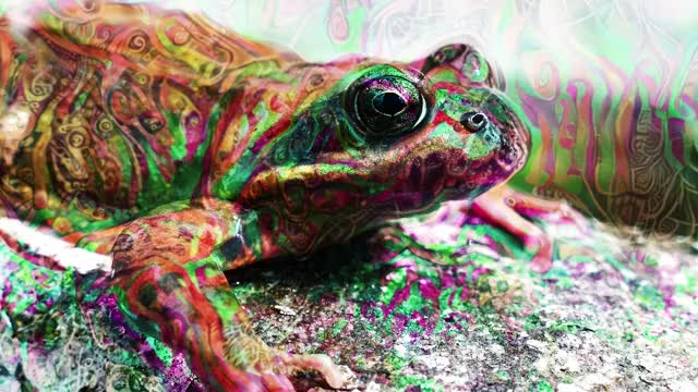 Watch Toad experiment GIF by Symmetric Vision (@stingrayz) on Gfycat. Discover more psychedelic trip visuals, psychedelic visuals, psychedelics GIFs on Gfycat