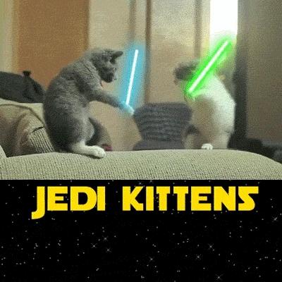 kittens, jedi kittens  GIFs