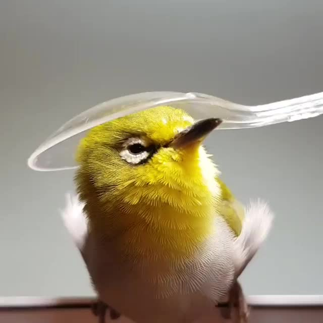 Watch and share Birdbee0705 GIFs and Thecutest GIFs on Gfycat