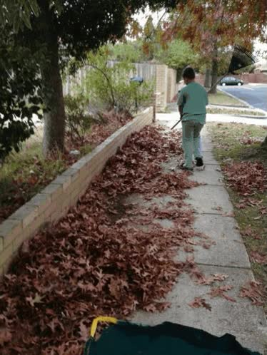 Watch and share Noah-rakes-leaves GIFs on Gfycat