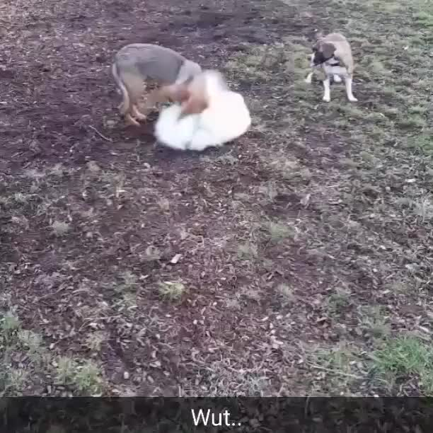Watch and share Rarepuppers GIFs and Funny GIFs on Gfycat