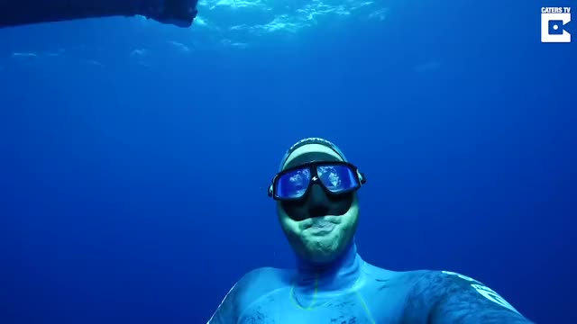 Watch Diver Captures Selfie With Giant Whale GIF by bobsagetsbaguettes on Gfycat. Discover more catersnewsagency, caterstv, clips, dive, diver, diving, giant, selfie, viral, whale GIFs on Gfycat