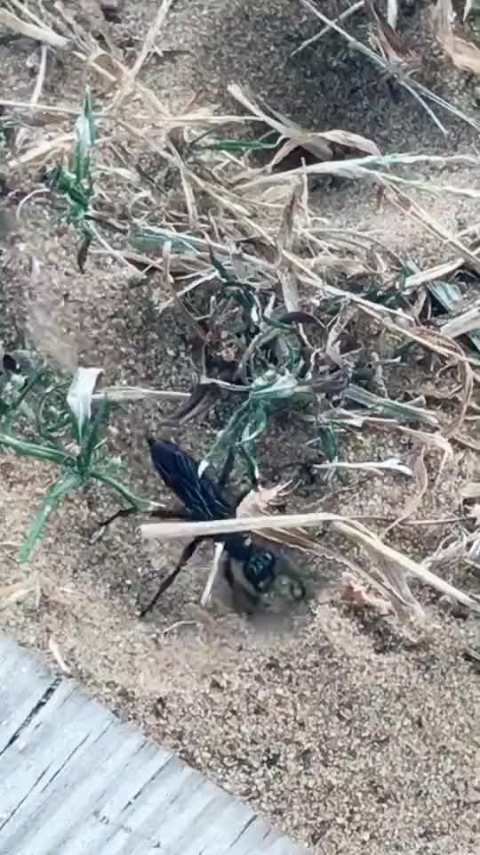 Watch and share Nature GIFs by EngineerScientist on Gfycat