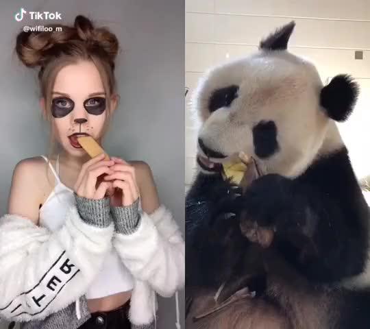 Watch It was funny💕 #pandacrunch ✋🏻🐼 #tiktok #duett GIF by TikTok (@funniestplace) on Gfycat. Discover more duett, pandacrunch, tiktok GIFs on Gfycat