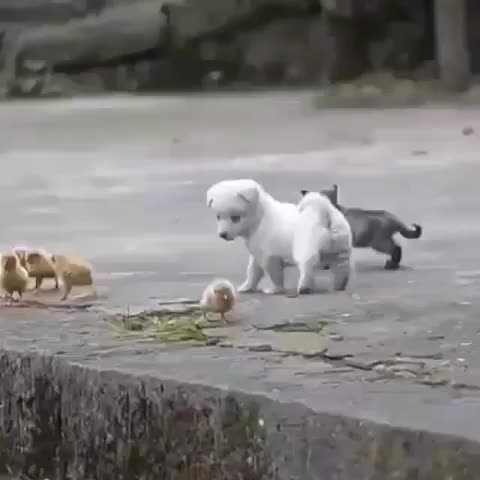 Watch and share Dog Cat Pets GIFs and Dogstagram GIFs by vani  on Gfycat