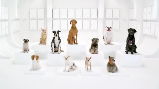 Watch and share Barking Dogs GIFs and Dog Choir GIFs on Gfycat