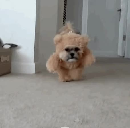 Watch and share Halloween GIFs and Dog GIFs by Vinegret on Gfycat