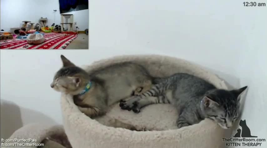 StartledCats, gifs, startledcats, kitter returns from the cat dimension GIFs