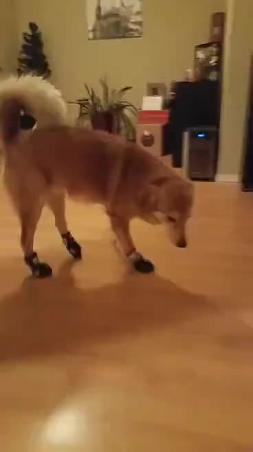 Watch and share Boots GIFs on Gfycat