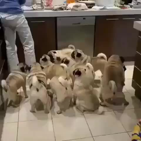 Watch and share Puppies GIFs and Dogs GIFs by PracticalProperty on Gfycat
