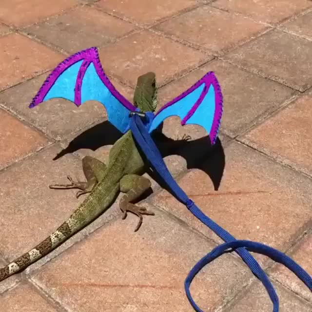 Watch and share Dragon GIFs and Lizard GIFs by teistom on Gfycat