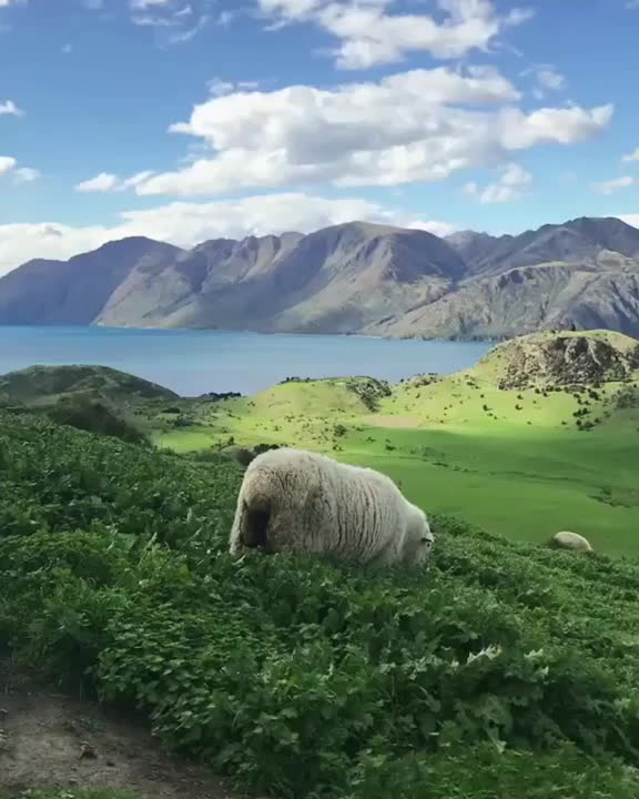 Watch and share Nature GIFs by mossberg91 on Gfycat