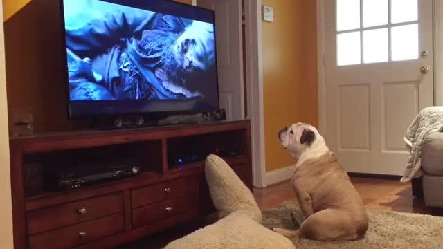 Watch Bulldog Tries To Protect Leonardo DiCaprio From Bear Attack! GIF by PM_ME_STEAM_K3YS (@pmmesteamk3ys) on Gfycat. Discover more aww, awww, brave, bulldog, bulldogs, cute, dog, dogs, funny, leo, leonardodicaprio, love GIFs on Gfycat