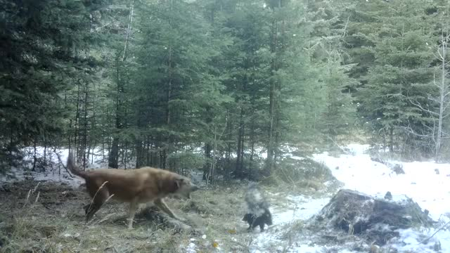 Watch and share Trail Cam GIFs and Sprayed GIFs on Gfycat