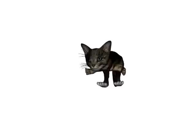 Watch this trending GIF on Gfycat. Discover more cat GIFs on Gfycat