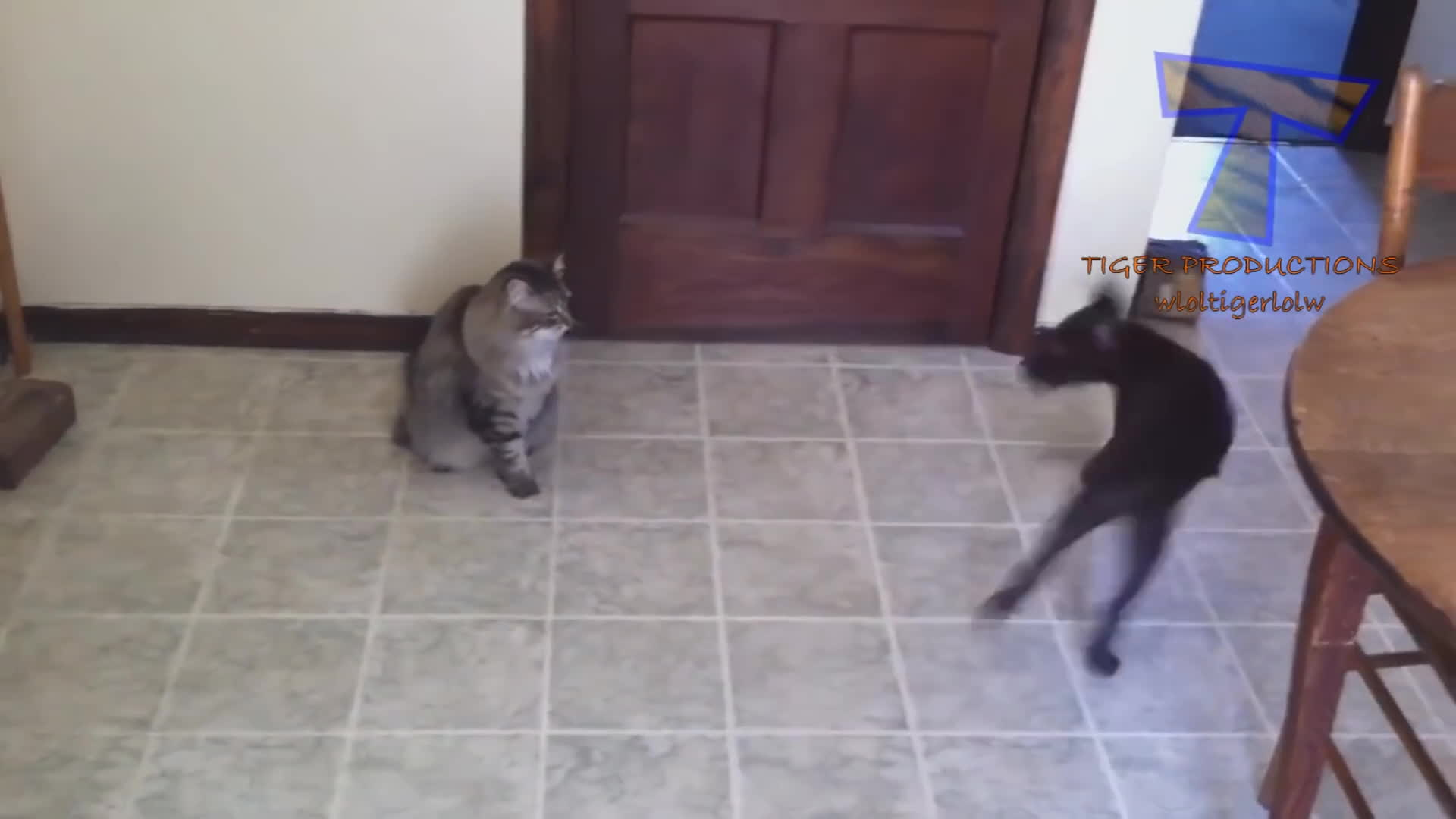 CatSlaps, popular, Cats are the kings of animal comedy - Funny cat compilation GIFs