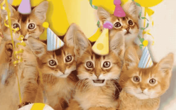 a, aww, ballon, bday, best, birthday, blink, cat, confetti, cute, happy, happy birthday, hat, kitten, kitty, make, party, sweet, wish, wishes, Cute birthday cats GIFs