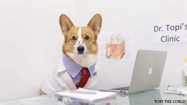 Watch and share DOCTOR DOG - Topi The Corgi GIFs on Gfycat