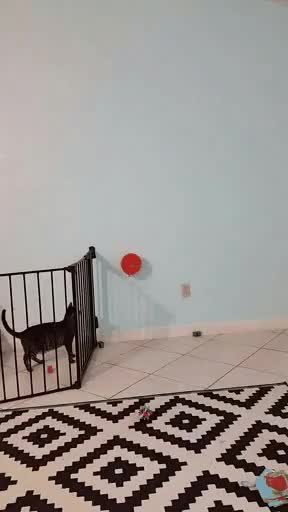 Watch and share Balloon GIFs and Catgifs GIFs by miaoumiaou on Gfycat