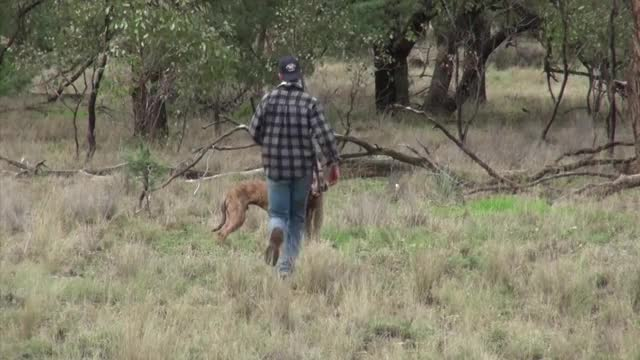 Watch and share Roo GIFs by wtfjynx on Gfycat