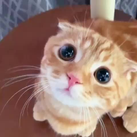 Watch and share Cute GIFs and Eyes GIFs by catscatscats137 on Gfycat