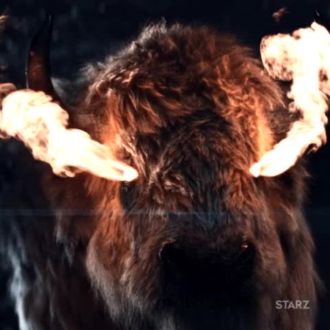 Watch and share Starz GIF By American Gods - Find & Share On GIPHY GIFs on Gfycat