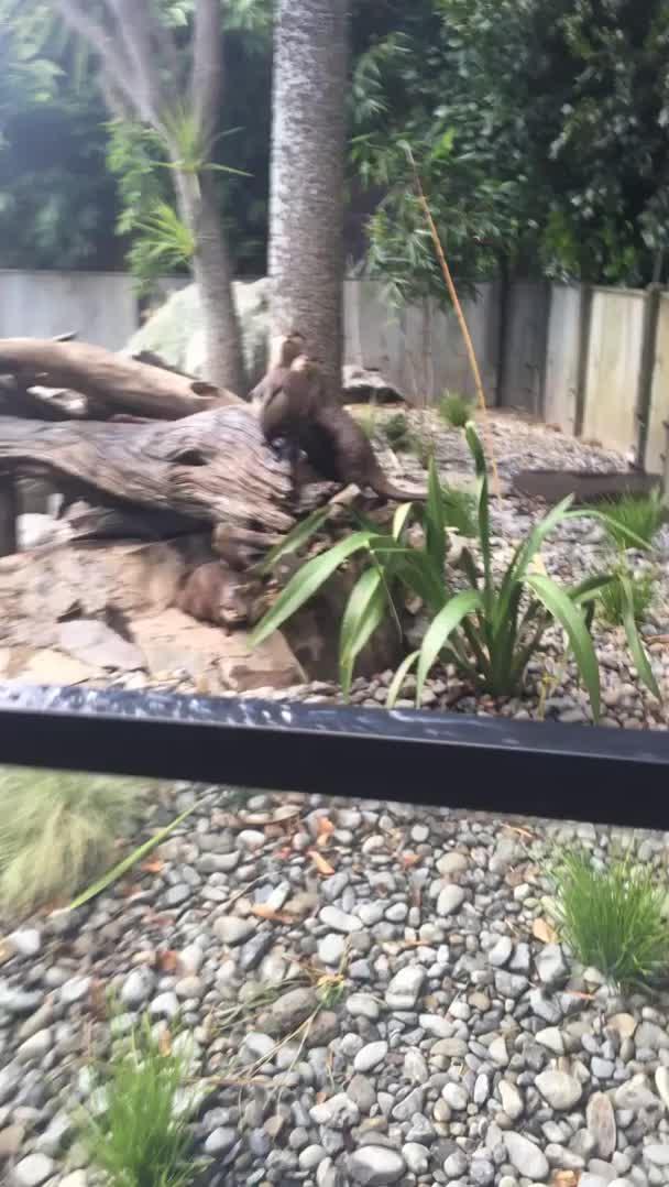 dapperiszapper, tribe of otters GIFs