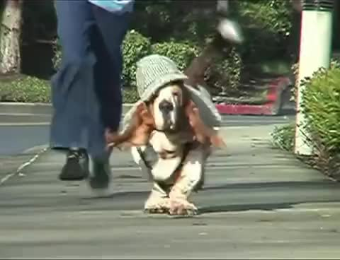 Watch and share Basset Hound Dressed As Sherlock Holmes Running In Slow Motion GIFs on Gfycat