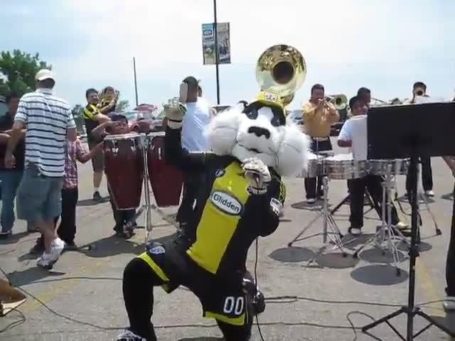 Sports, amarilla, daddyrolas, turbina, crew cat singing for la turbina amarilla GIFs