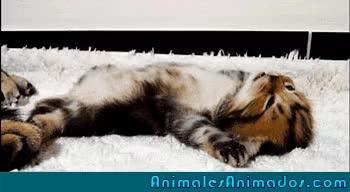 El gato que hace yoga