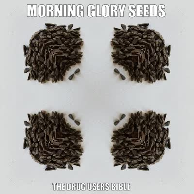 Watch and share Morning Glory Seeds GIFs and Ipomoea Violacea GIFs by LenoreX on Gfycat