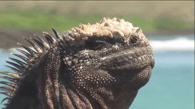 Watch lizard people GIF on Gfycat. Discover more related GIFs on Gfycat