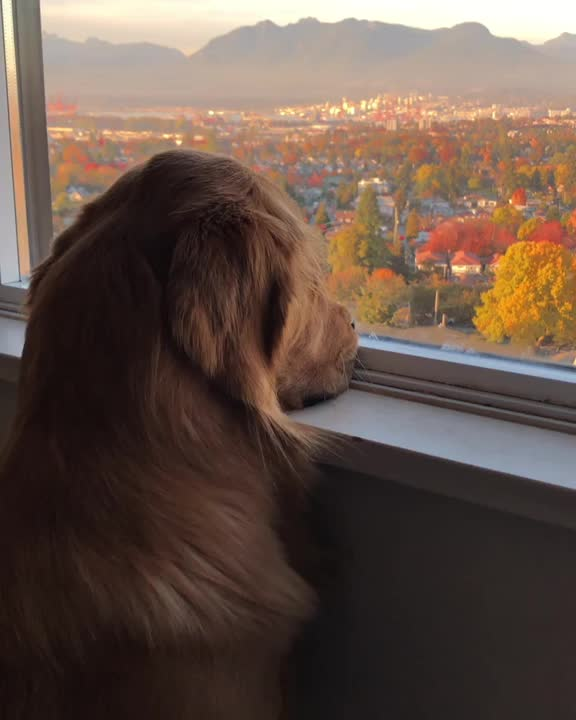 Starskythegoldie, He acts like he didn't just spend 3 hours playing outside... GIFs