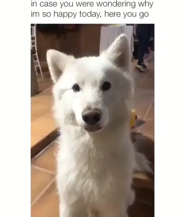 Watch and share Doggy Ears GIFs by Gas Bandit on Gfycat
