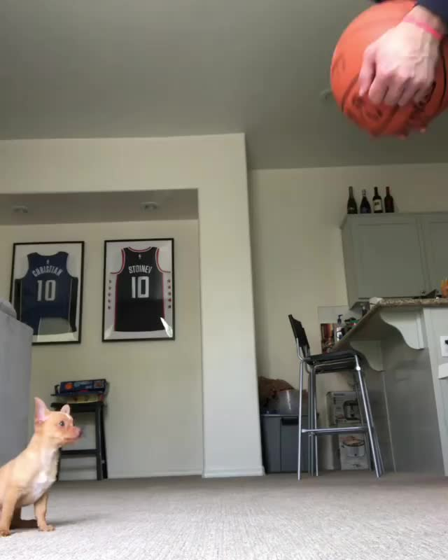 basketball, dog, puppy, A very talented good boy GIFs