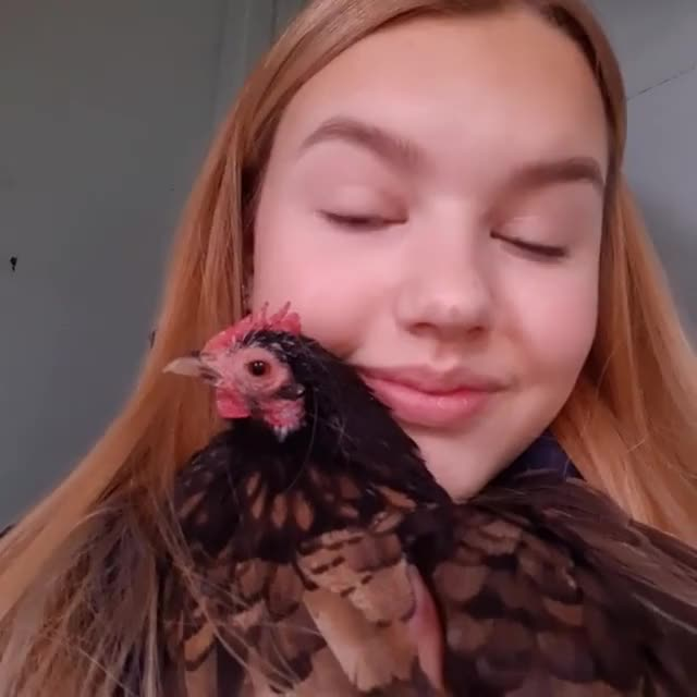 Watch and share Chickens GIFs and Kindness GIFs by lnfinity on Gfycat