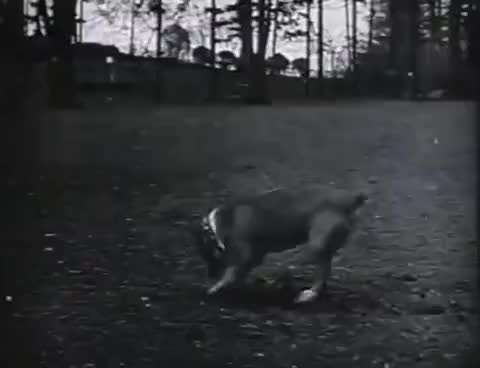 Watch and share The Butcher Boy - Buster Keaton GIFs on Gfycat