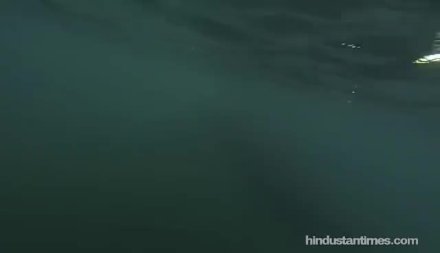 Haunting song of humpback whales GIFs