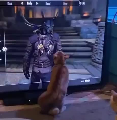 Kitty doesnt know how to handle a Khajit