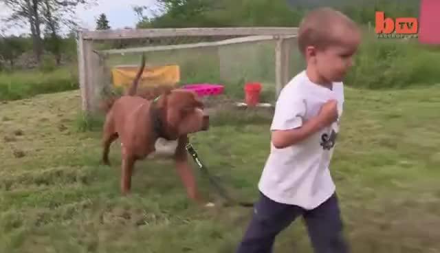 Giant Pit Bull Hulk's $500,000 Puppy Litter GIFs