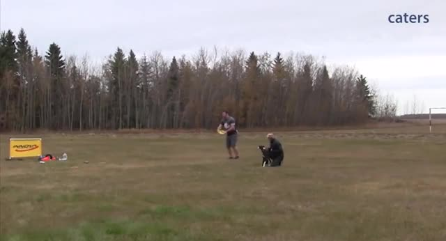 Watch Dog setting the world record for the longest frisbee catch of 402 feet GIF by tothetenthpower (@tothetenthpower) on Gfycat. Discover more related GIFs on Gfycat