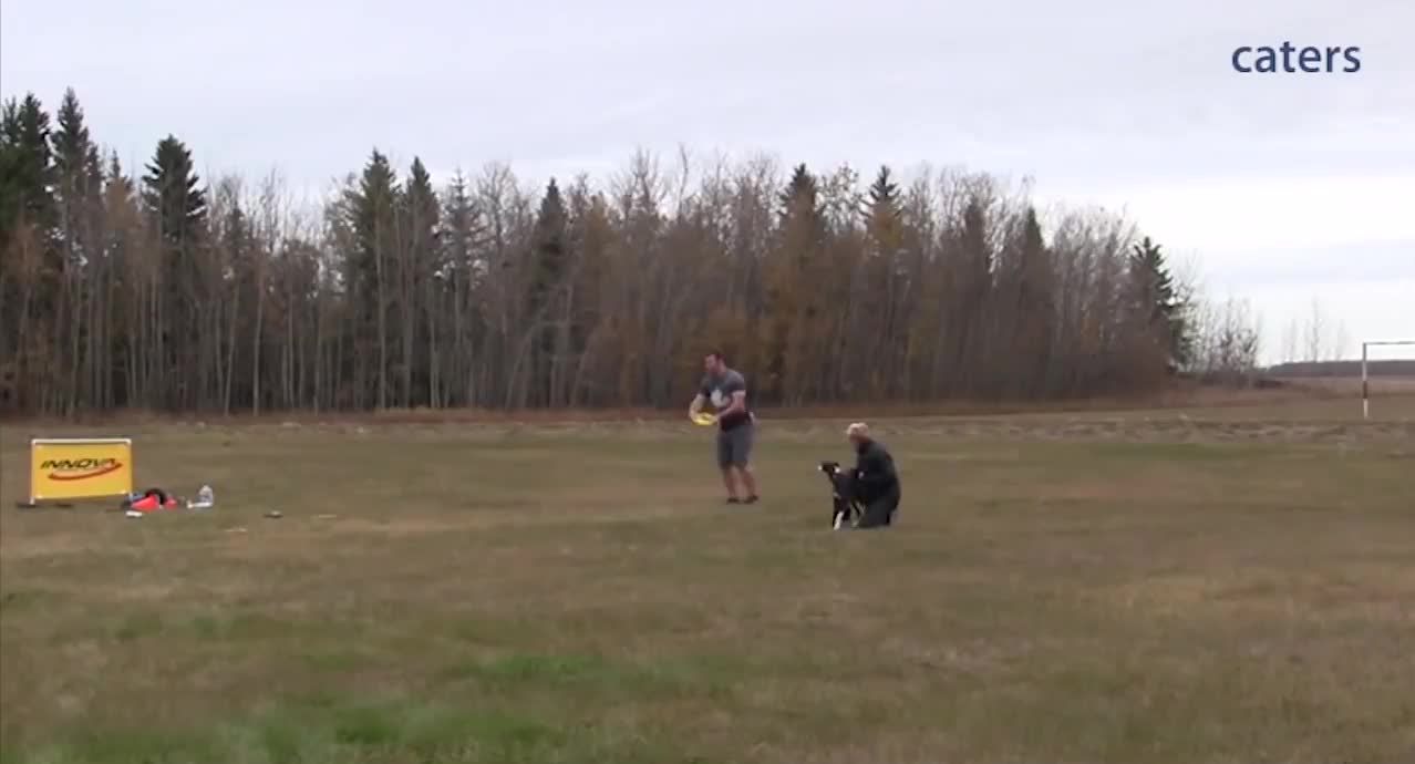 Dog setting the world record for the longest frisbee catch of 402 feet GIFs