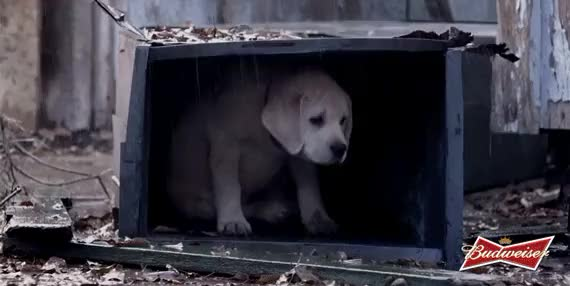 Watch and share Super Bowl Ads Lost Dog Teaser Lost Dog In The Rain GIFs on Gfycat