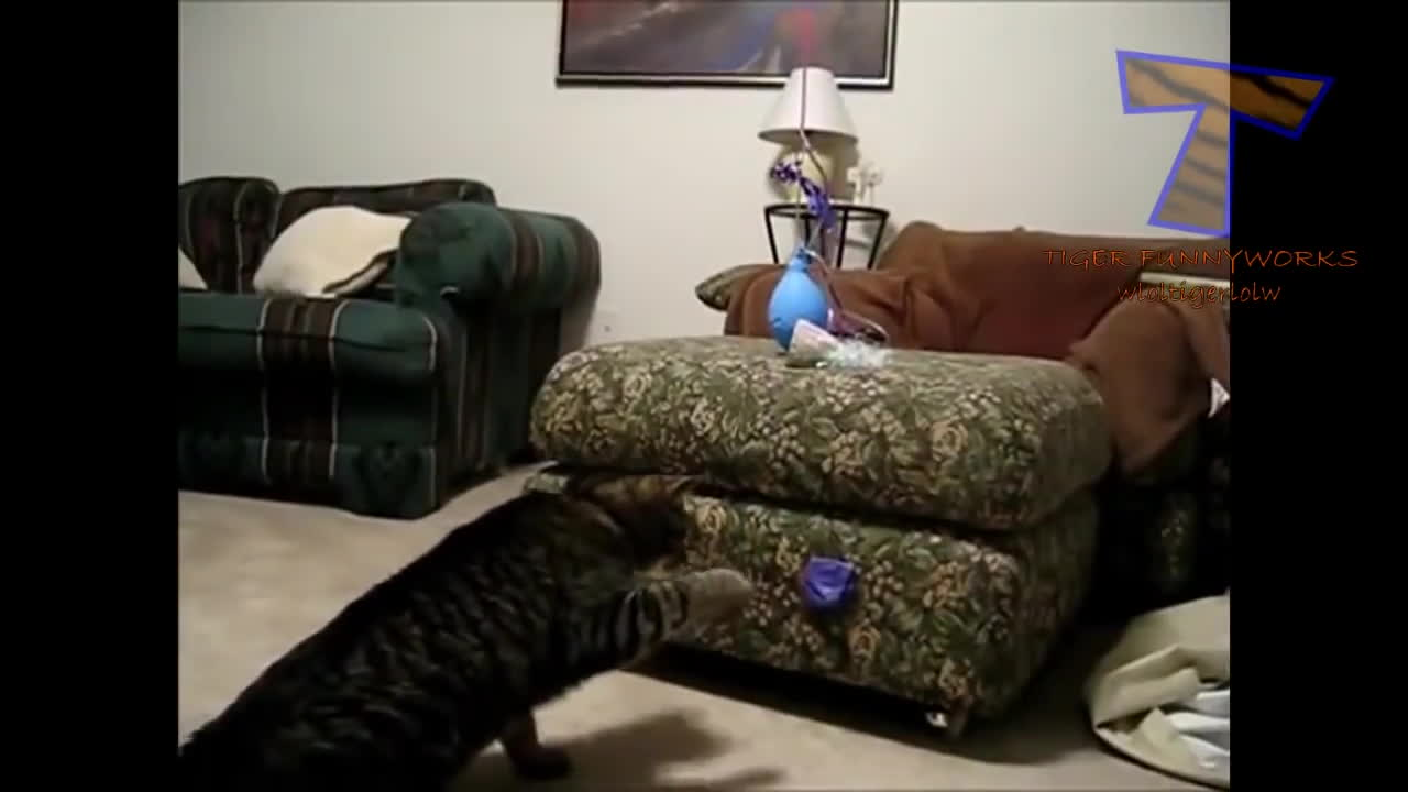 CatSlaps, popular, собака и воздушные шары, Кошки и собаки против воздушных шаров. Забавные коты и псы GIFs