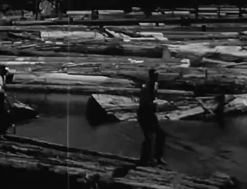 Watch and share Redwood Forests - Lumber Felling & Milling 1940's GIFs on Gfycat