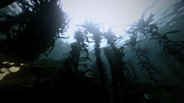 Watch and share Subnautica GIFs and Underwater GIFs by Alexander452 on Gfycat