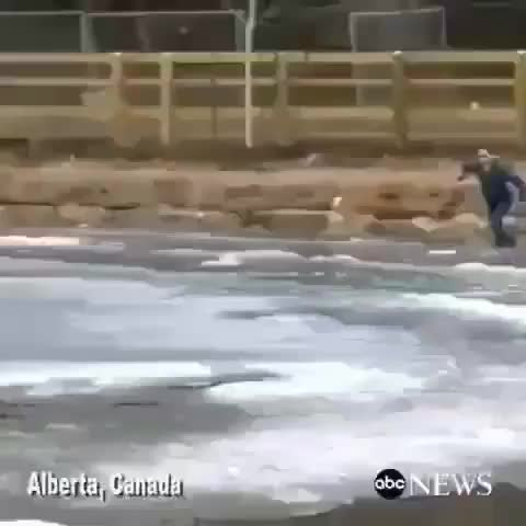 Lady rushing out onto the ice to save a dog that fell through GIFs